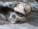 Dmanisi-skull-item